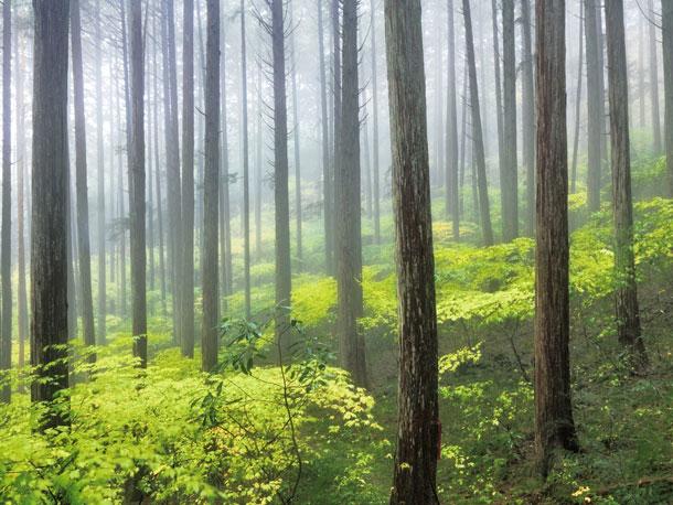 人工林と天然林