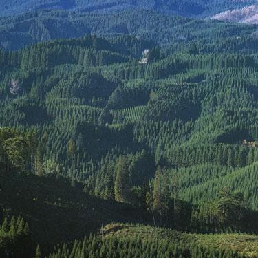 Metsad.