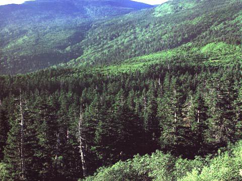 高山帯 亜高山帯 落葉広葉樹林 常緑広葉樹林 亜熱帯