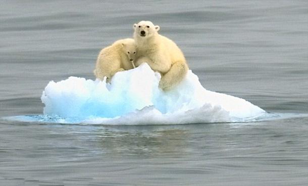『絶滅危惧種』 - 絶滅種と絶滅危惧種・温暖化が及ぼす動物・植物への影響 - プラス地球温暖化