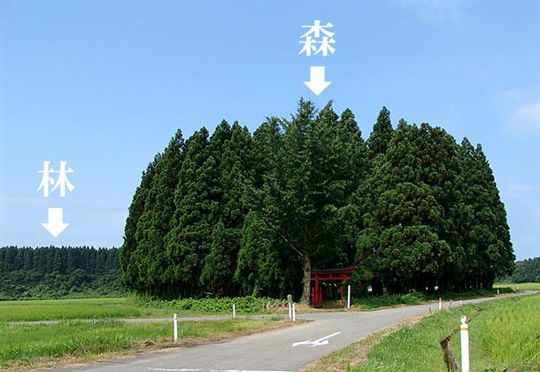 森」と「林」の違い